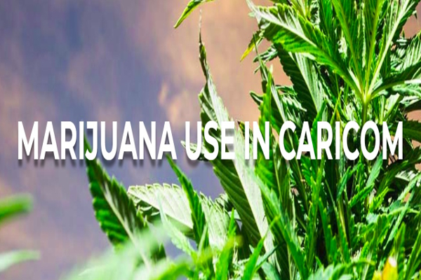 caricom marijuana use