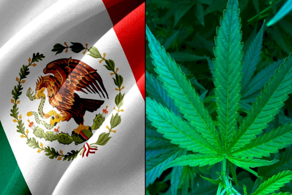 mexico flag cannabis2