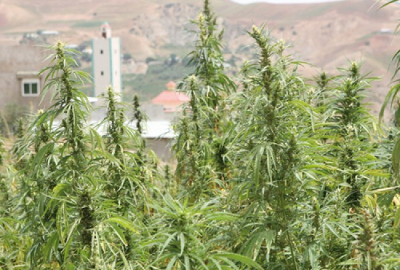 morocco cannabis moque