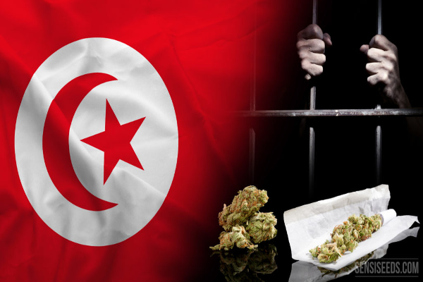 tunisia cannabis