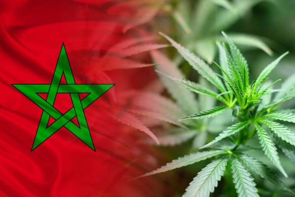 morocco flag cannabis